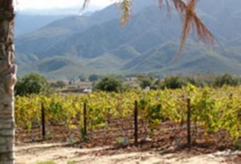 Der Weinbau des Conradie Familien Weinguts liegt in mitten seiner Weinstöcke und hat hervorragende Böden .