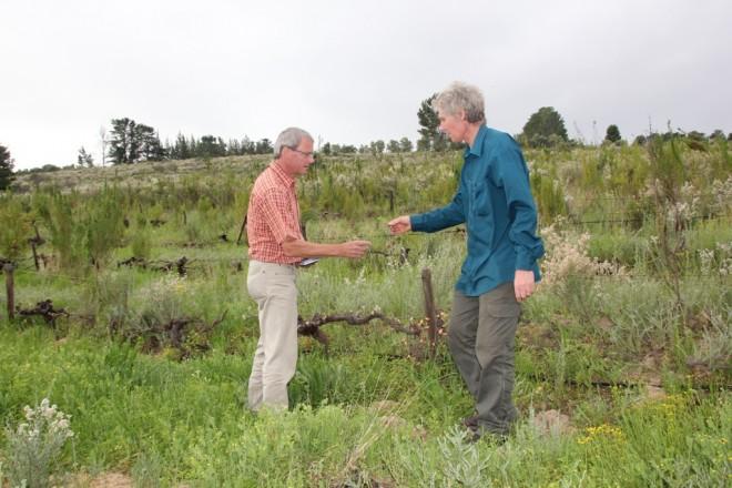 Im Weinberg von Upland Organic wachsen Wildblumen und gräser. Biodiversität pur. Der Boden ist sehr locker und wird nur mit Gründungung gepflegt.