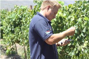 Eine regelmäßige Kontrolle der Trauben ist die Basis für excellenten Wein